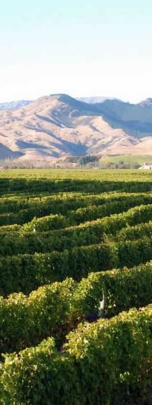 Explore sustainable wine regions